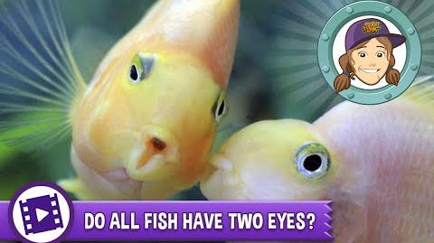 Ask Tierney - Do all fish have two eyes?
