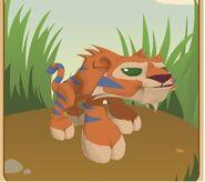 Default tiger433