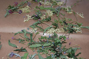 Texture or background - wild herbs