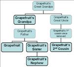 Grapefruit family