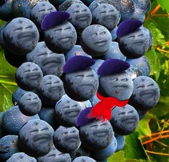 The Sour Grapes – saggaf93