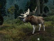 Great moose