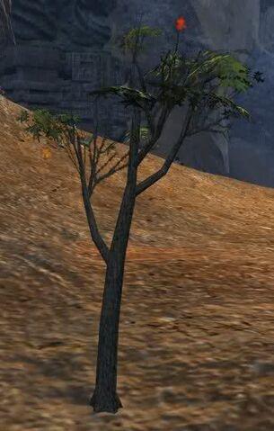 File:Tree of Death.jpg