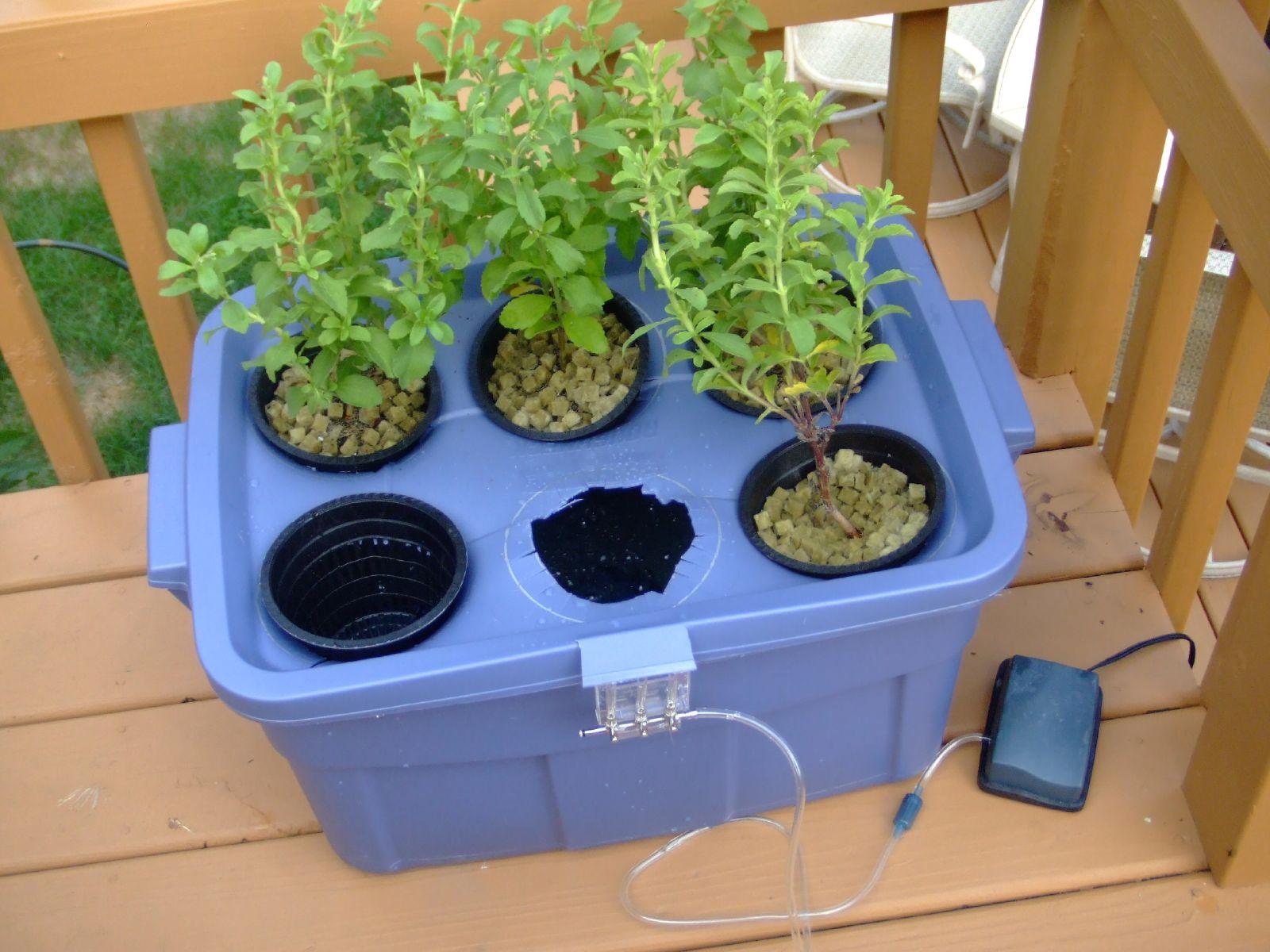 Datei:Hydroponic Stevia Garden.jpg