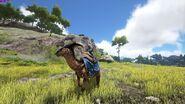 Parasaur Limited Saddle