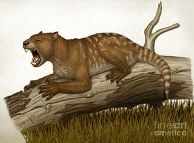Thylacoleo-carnifex-a-marsupial-heraldo-mussolini