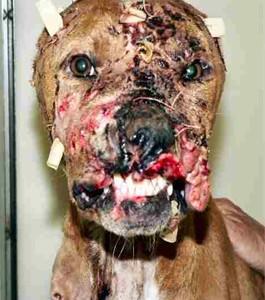 File:Dogfightloser.jpg