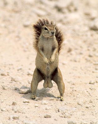 File:Squirrel-Original.jpg