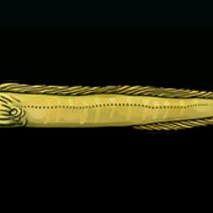 Green Moray Eel - Rarity: Rare, Size: Small