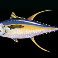 Yellowfin Tuna - Rarity: Rare, Size: Medium