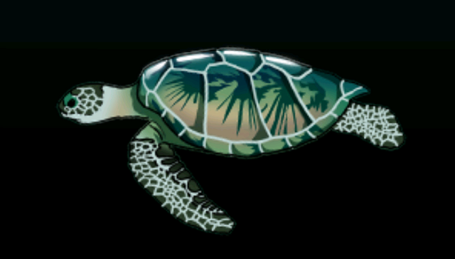 File:GreenSeaTurtleACP.png