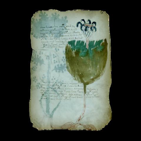 File:AC4BF Voynich Manuscript - Folio 35r.png