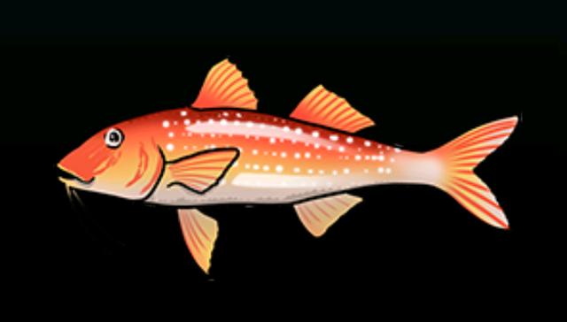 File:SpottedGoatfishACP.png
