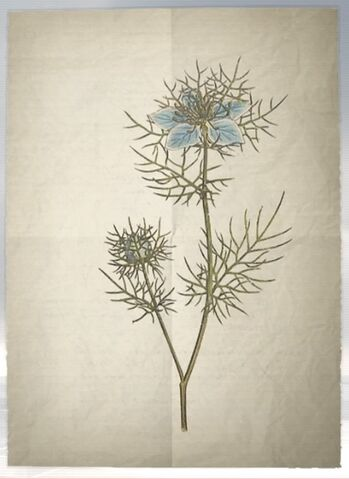 File:ACS DB Love in a Mist.jpg