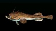 AnglerACP
