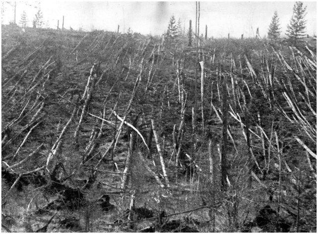 File:Tunguska trees.jpg