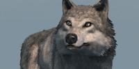 Database: Wolf