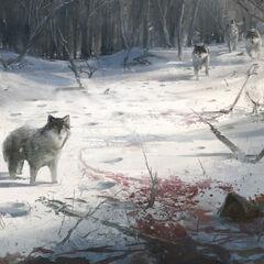 狼群的设定图