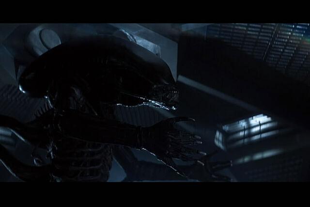 File:Alien - gato smucky 16.jpg