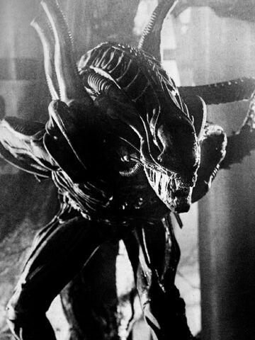 File:Aliensbwwarriorstill.jpg