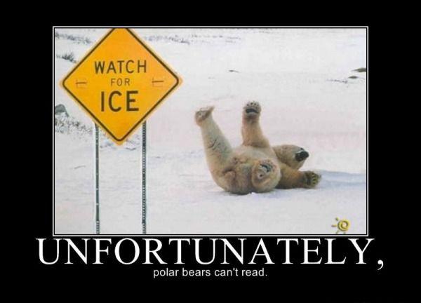 File:Polarbears.jpg