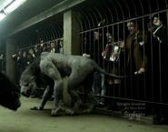 Beingwolf