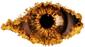 CBB 7 Eye