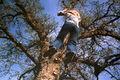 Thumbnail for version as of 21:17, November 15, 2007