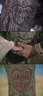 Tree gaffe