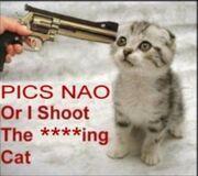 Pics NAO