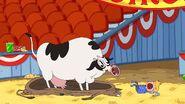 No! A COW!!!
