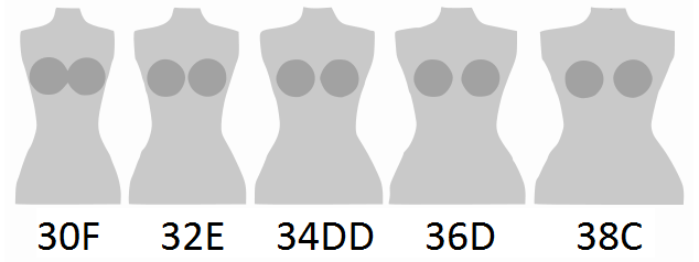 File:Cup size comparison sister sizes.png