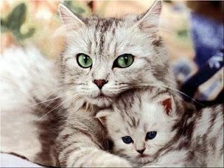 Ficheiro:Gatos.jpg