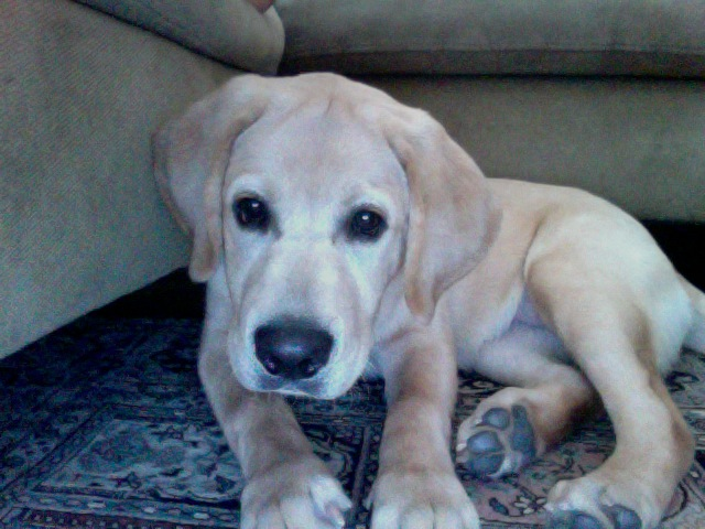 File:Personal dog on floor.jpg