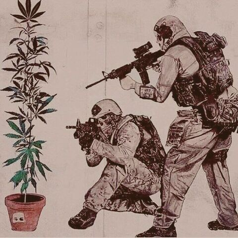 File:SWAT and cannabis plant.jpg