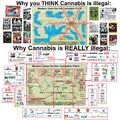Why cannabis is illegal.jpg
