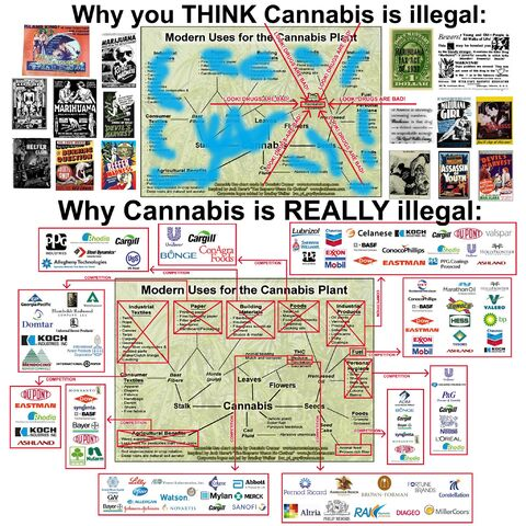 File:Why cannabis is illegal.jpg