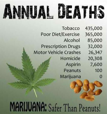 File:Marijuana is safer than peanuts.jpg