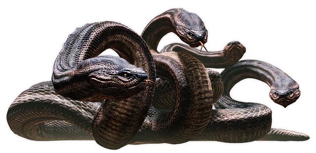 File:Dragons Dogma Hydra.png