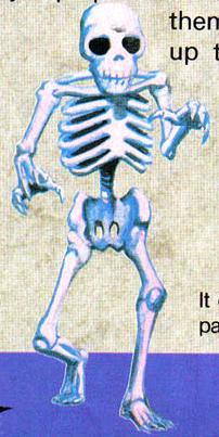 File:NP C3 Skeleton.JPG