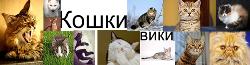 Кошки вики