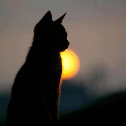 File:Cat (7).jpg
