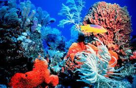 File:Coral reef -1.jpg