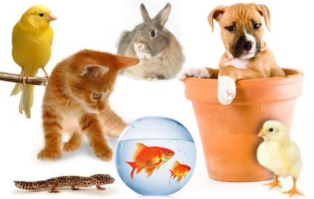 File:Animales-domesticos-ingles.jpg