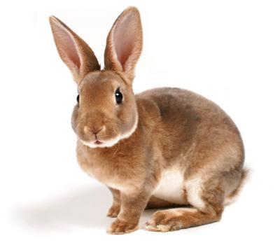 File:Rabbit forever.jpg