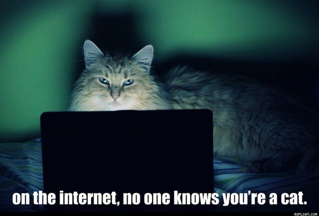 File:On The Internet No One Knows You re A Cat.jpg