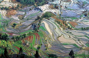 Terrace field yunnan china denoised.jpg