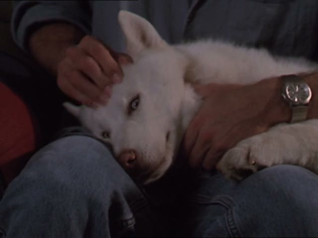 File:Cute guy taking care of prue the dog.jpg