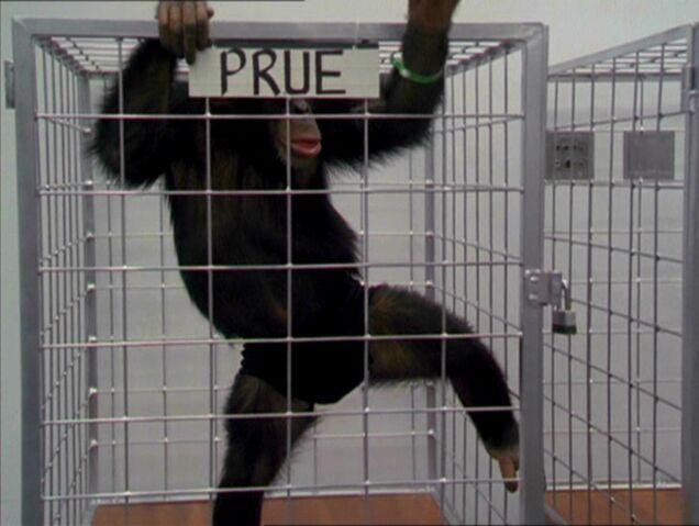 File:MonkeyPrue.jpg