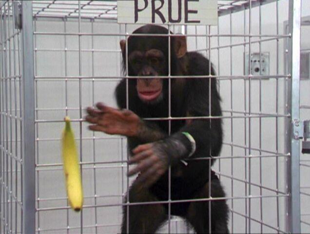 File:2x20-MonkeyPrueTelekinesis.jpg